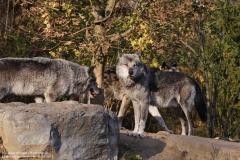 Zoo_Hannover_161118_IMG_8868