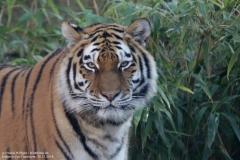Zoo_Hannover_161118_IMG_8888