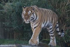 Zoo_Hannover_161118_IMG_8898