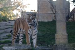 Zoo_Hannover_161118_IMG_8909