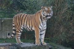 Zoo_Hannover_161118_IMG_8920