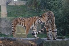 Zoo_Hannover_161118_IMG_8924