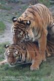 Zoo_Hannover_161118_IMG_8933