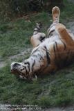 Zoo_Hannover_161118_IMG_8937