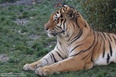 Zoo_Hannover_161118_IMG_8943