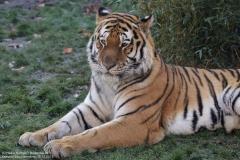 Zoo_Hannover_161118_IMG_8946
