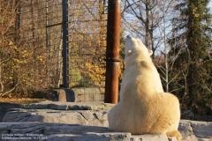 Zoo_Hannover_161118_IMG_8949