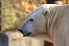 Zoo_Hannover_161118_IMG_8952