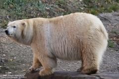 Zoo_Hannover_161118_IMG_8959