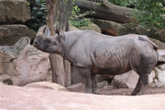 Zoo_Hannover_170714_copy_Heike_Weiler_IMG_1401