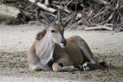 Zoo_Hannover_170714_copy_Heike_Weiler_IMG_1414