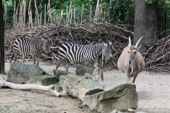 Zoo_Hannover_170714_copy_Heike_Weiler_IMG_1415
