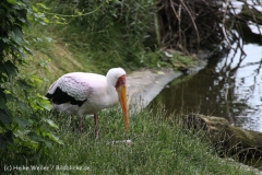 Zoo_Hannover_170714_copy_Heike_Weiler_IMG_1426