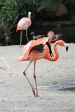 Zoo_Hannover_170714_copy_Heike_Weiler_IMG_1498