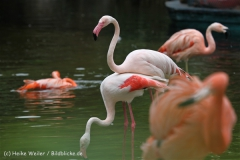 Zoo_Hannover_170714_copy_Heike_Weiler_IMG_1502