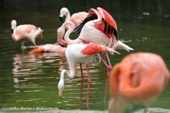 Zoo_Hannover_170714_copy_Heike_Weiler_IMG_1507