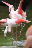 Zoo_Hannover_170714_copy_Heike_Weiler_IMG_1512