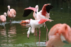 Zoo_Hannover_170714_copy_Heike_Weiler_IMG_1513