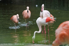Zoo_Hannover_170714_copy_Heike_Weiler_IMG_1515