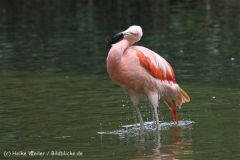 Zoo_Hannover_170714_copy_Heike_Weiler_IMG_1519