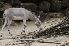 Zoo_Hannover_170714_copy_Heike_Weiler_IMG_1537