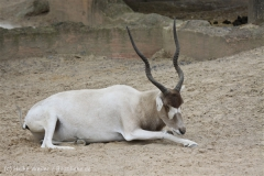 Zoo_Hannover_170714_copy_Heike_Weiler_IMG_1538