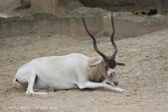 Zoo_Hannover_170714_copy_Heike_Weiler_IMG_1539