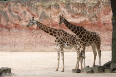 Zoo_Hannover_170714_copy_Heike_Weiler_IMG_1542