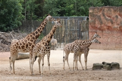 Zoo_Hannover_170714_copy_Heike_Weiler_IMG_1548