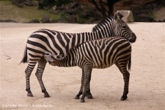 Zoo-Hannover-180610-IMG_3670