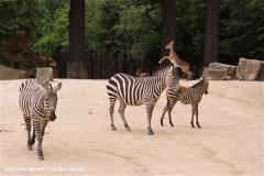 Zoo-Hannover-180610-IMG_3684