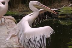 Zoo-Hannover-180610-IMG_3745