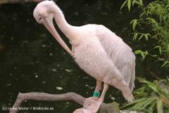 Zoo-Hannover-180610-IMG_3763