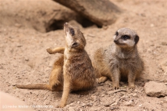 Zoo-Hannover-180610-IMG_3804