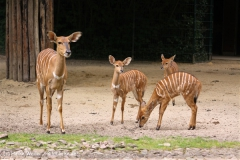 Zoo-Hannover-180610-IMG_3845