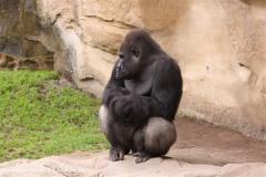 Zoo-Hannover-180610-IMG_3880