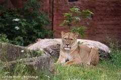 Zoo-Hannover-180610-IMG_3895