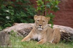Zoo-Hannover-180610-IMG_3908