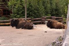 Zoo-Hannover-180610-IMG_3955