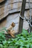 Zoo_Hannover_180915_IMG_8553