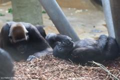 Zoo_Hannover_180915_IMG_8570