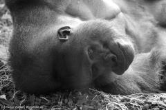 Zoo_Hannover_180915_IMG_8586
