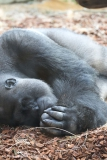Zoo_Hannover_180915_IMG_8590