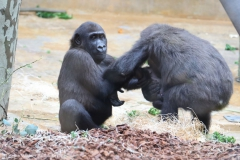Zoo_Hannover_180915_IMG_8607