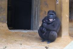 Zoo_Hannover_180915_IMG_8612