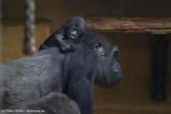 Zoo_Hannover_180915_IMG_8670