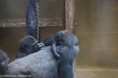 Zoo_Hannover_180915_IMG_8686
