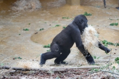 Zoo_Hannover_180915_IMG_8703