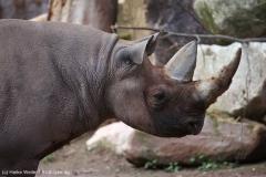 Zoo_Hannover_180915_IMG_8719