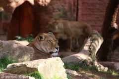Zoo_Hannover_180915_IMG_8722